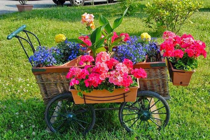 Não espere uma flor,plante seu proprio jardim