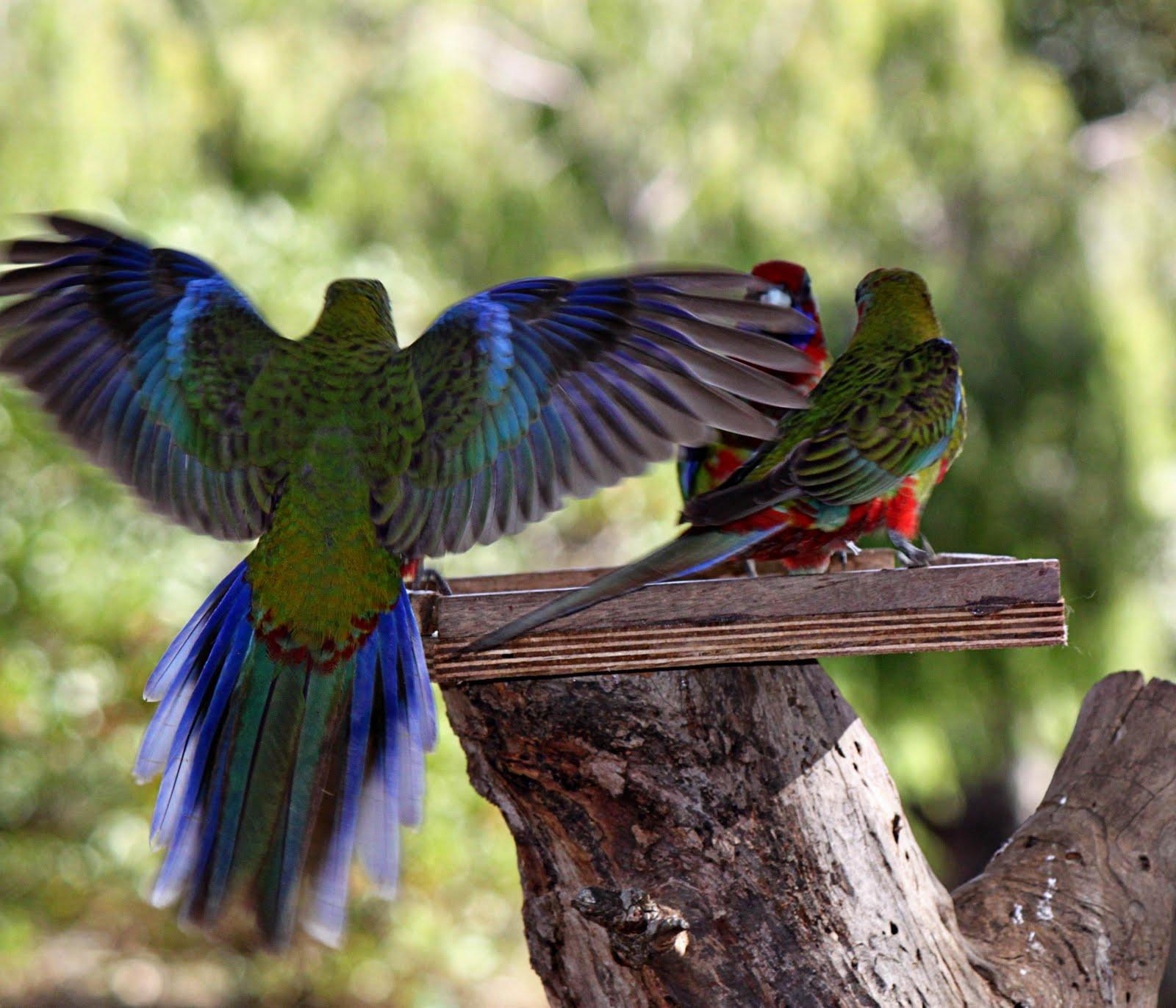 scootin' down under: Exotic Birds