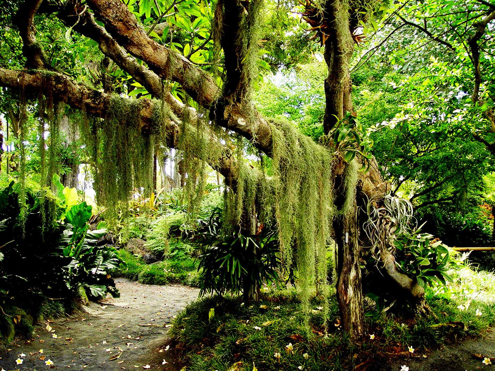 Wallpaper Blog: forest hd