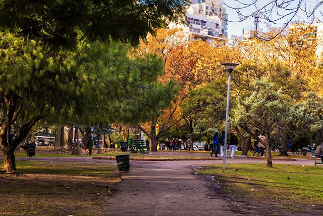 Arboles en parque Las Heras,Buenos  Aires