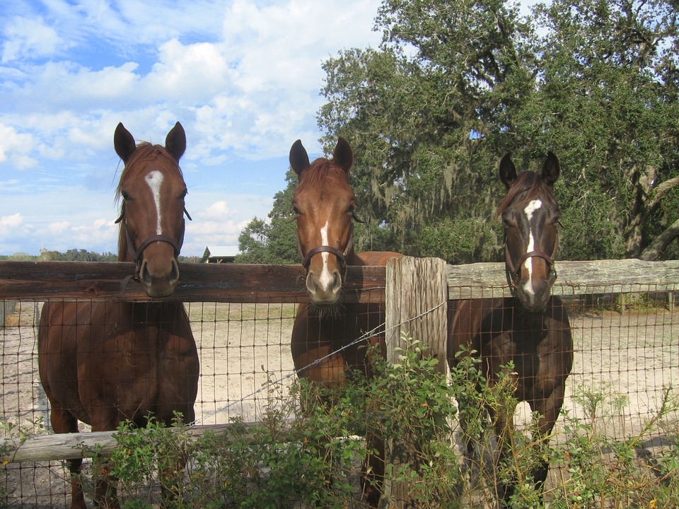 Choosing the Right Horse Fencing | Equestrian Fencing | Barn Fencing | Livestock Fence