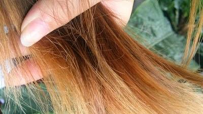 Cara Mengatasi Rambut Rusak Kering Dan Bercabang Secara Alami
