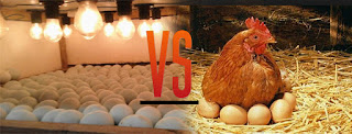 jenis jenis penetasan telur