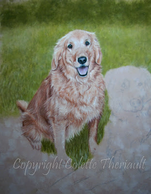 Golden Retriever Dog portrait painting in pastel by Colette Theriault