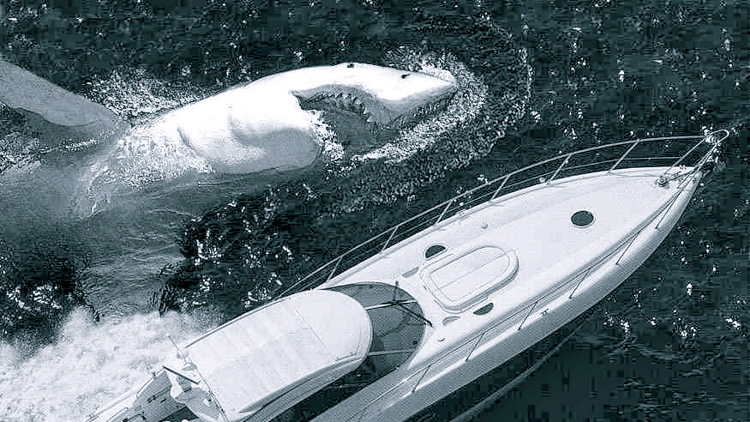 Megalodon Sightings Images - Reverse Search