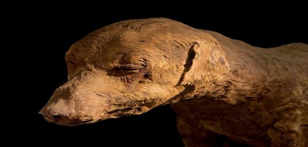 أهمية وكيفية التحنيط وأسراره عند المصريين القدماء