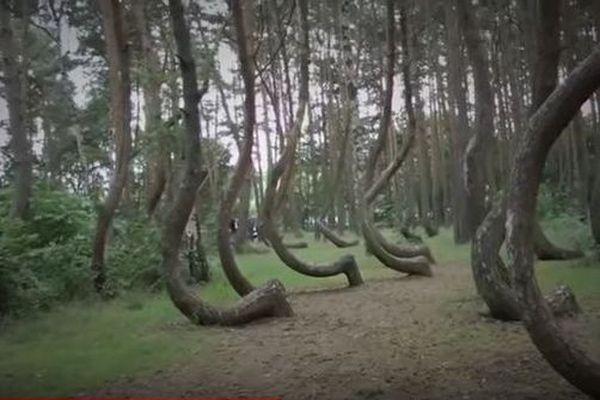 wajib bersabar seperti pohon bengkok yang berdiri tetap di tempatnya