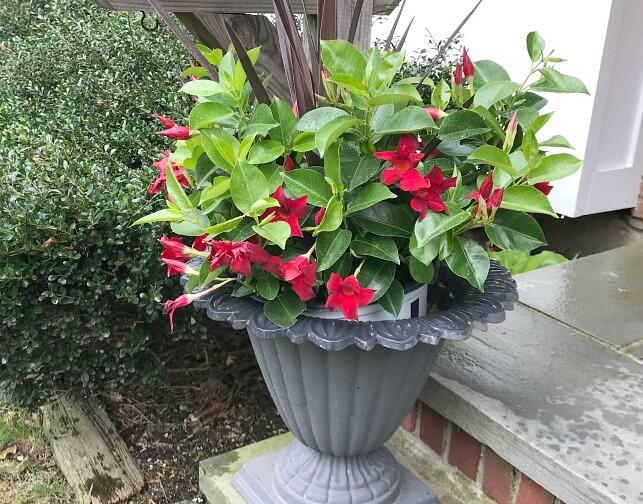 Front stoop planter with flowers