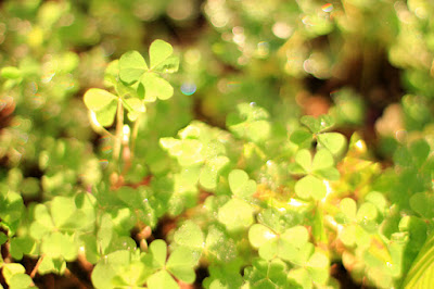 Clover Patch - Fairy's Eye View - Nature Photography by Mademoiselle Mermaid