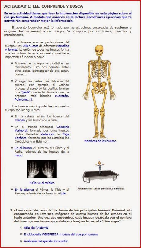 Articulaciones del cuerpo humano educacion fisica