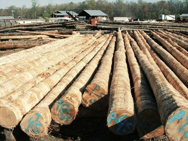 Pondasi tiang pancang kayu