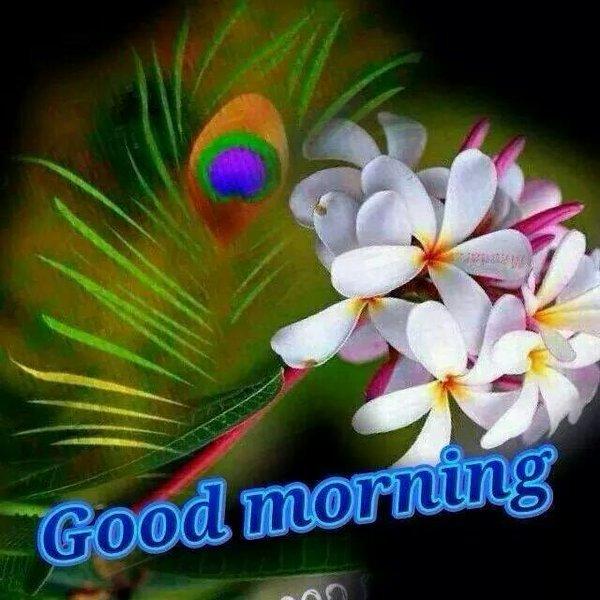 Latest Whatsapp Good Morning Images
