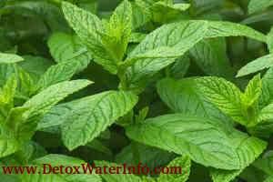 Mint lemon water recipe