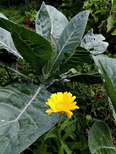 Consociazione tra ortaggi e tra ortaggi e fiori