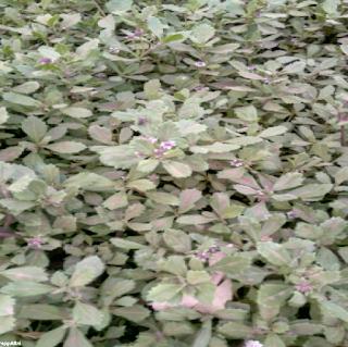 www.flowersrepgvkltni.blogspot.in