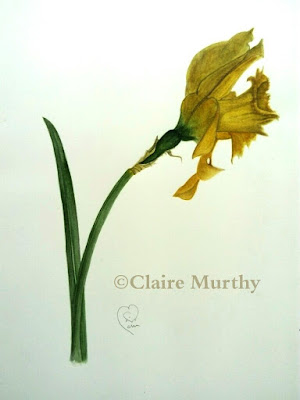 traditional art daffodil painting