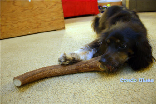 antler dog chews clean dog's teeth