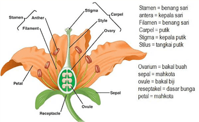 Bagian-bagian Bunga