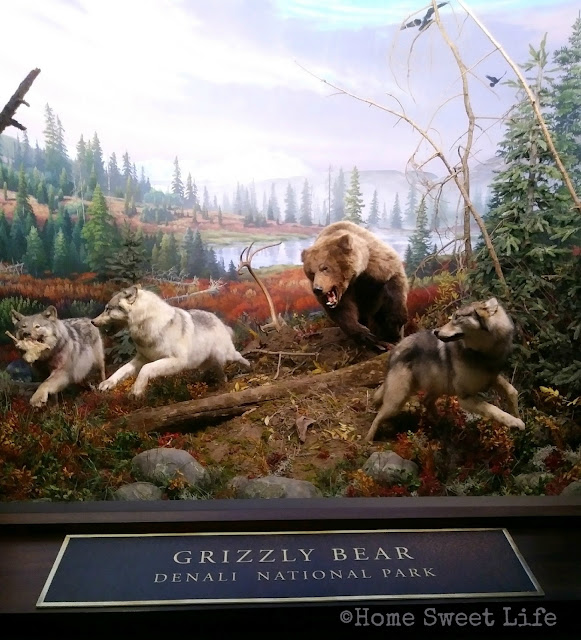 Wonders of Wildlife, Johnny Morris, Wildlife Galleries, Springfield MO, road trip, family trip, Bass Pro Shops, grizzly bear