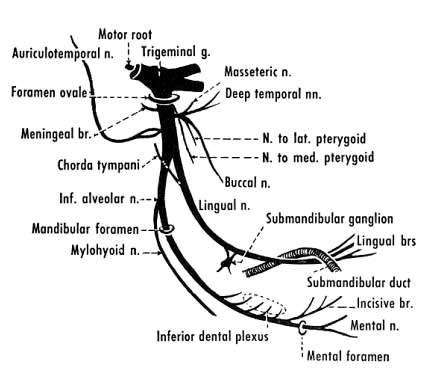 WizDent: ANATOMY OF HEAD & NECK