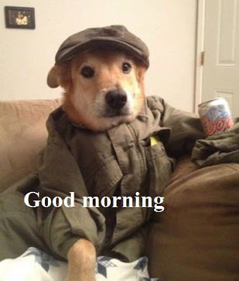 Funny animal good morning pictures - very funny dog
