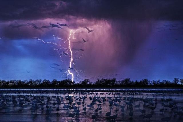 """""""Sếu đồi cát"""" của Randy Olson/Wood River, Nebraska, Mỹ"""