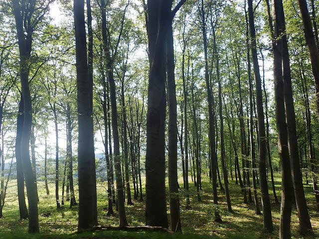 Las porastający zbocza najwyższej góry Węgier - Kekes 1014 m.n.p.m.