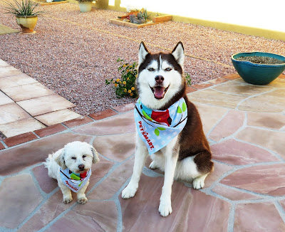 Who do you think wore their PetSmart bandana better, Icy or Phoebe?