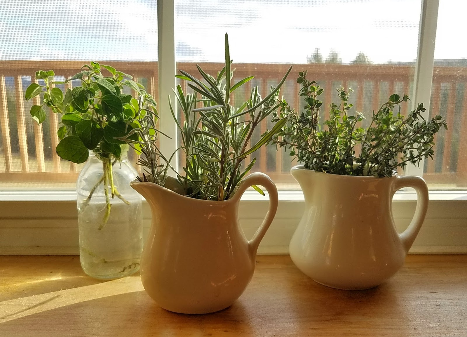 How to Grow Herbs Indoors on the Windowsill this Winter | Fresh Eggs ...