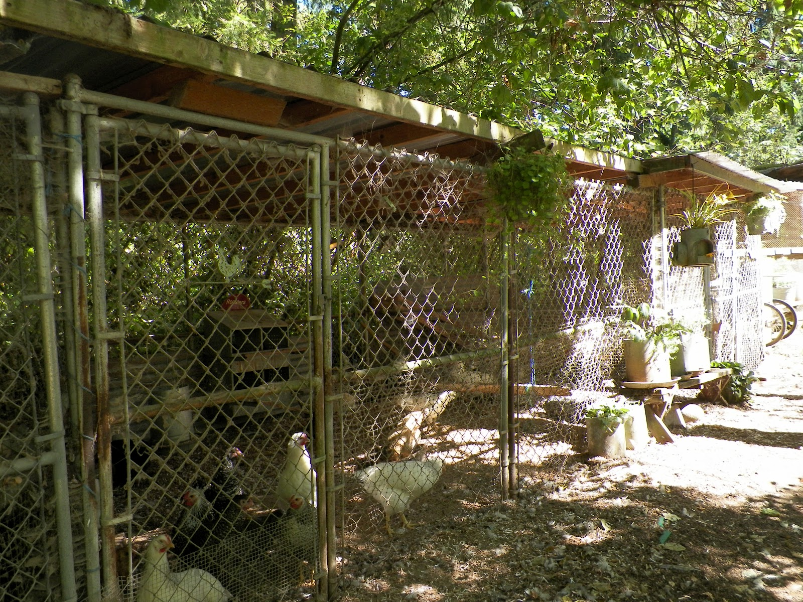 Just Chickens Cheap Amp Easy Poultry Pens Amp Nest Boxes