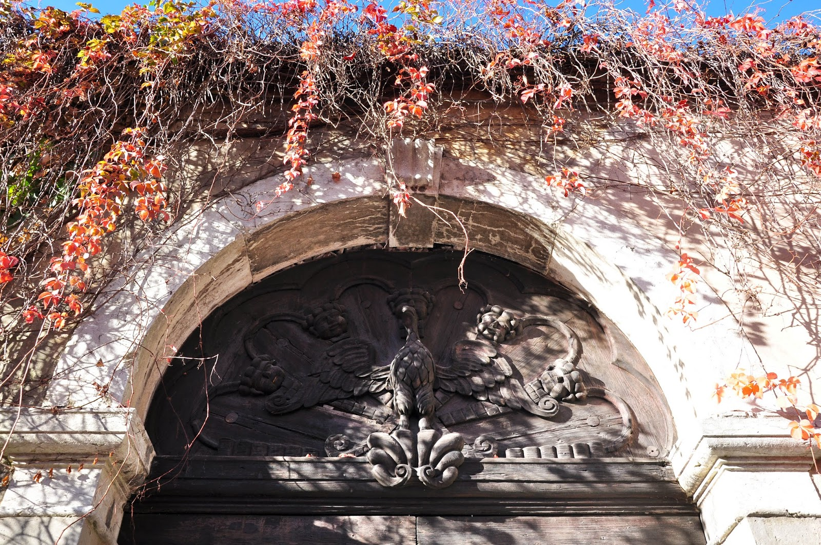 Red ivy covering a front gate, Feltre, Veneto, Italy