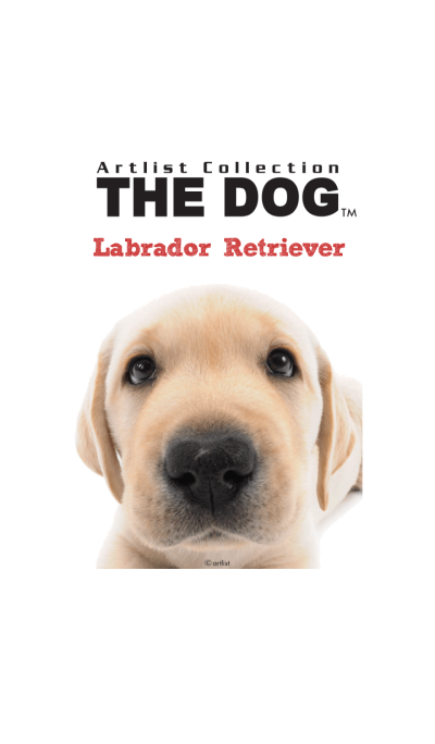 THE DOG Labrador Retriever