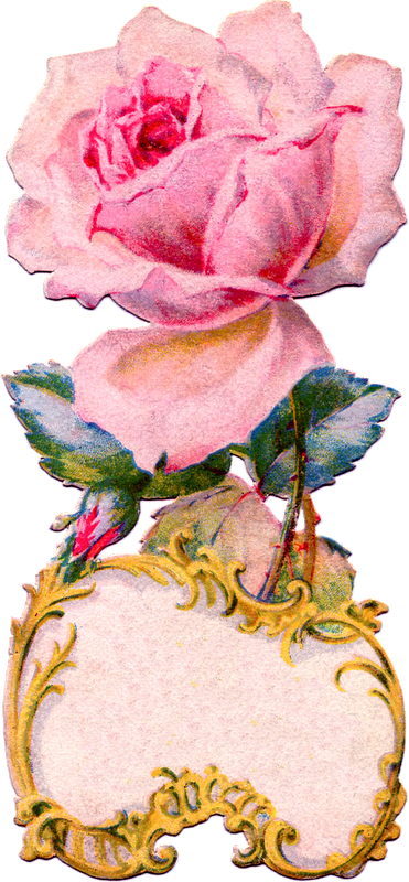 http://2.bp.blogspot.com/-BU2J9XRbKwU/Twfuq8-qSnI/AAAAAAAAMqQ/RRhHeupFg9U/s1600/pink+rose+antique++Image+GraphicsFairy006c.png