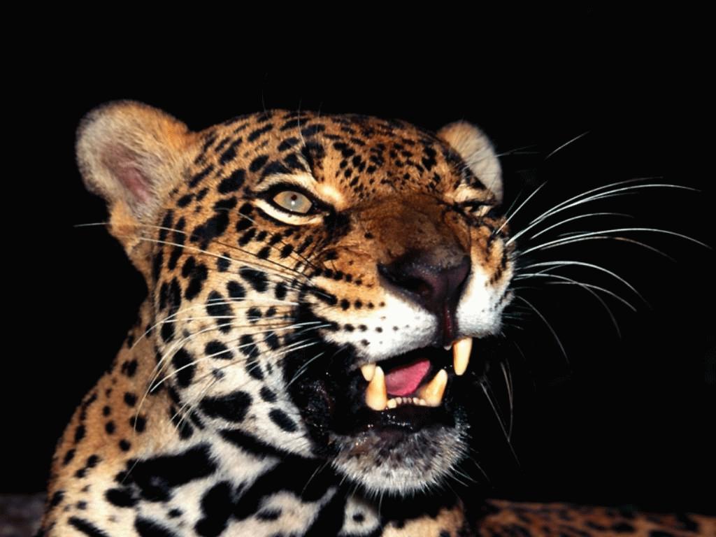 animals | My HD Animals
