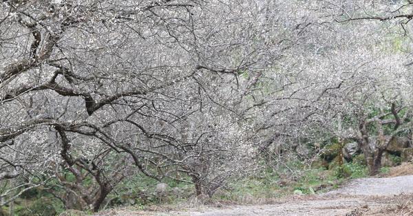 南投中寮劉家梅園秘境、龍鳳瀑布、天空步道、洞九山莊