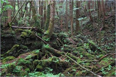 ป่าอาโอกิงาฮาระ (Aokigahara)