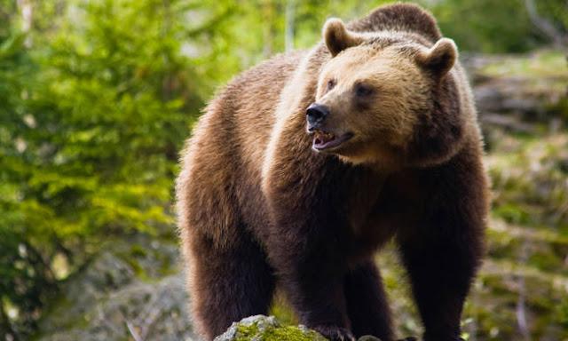 Το χάρο με τα μάτια της είδε γυναίκα βοσκός όταν της επιτέθηκε αρκούδα