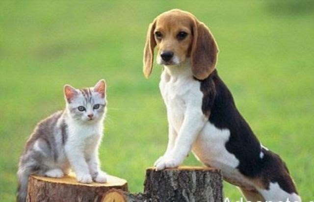 Πράσινο Κίνημα: Να αποσυρθεί τώρα το απαράδεκτο νομοσχέδιο για τα Ζώα Συντροφιάς