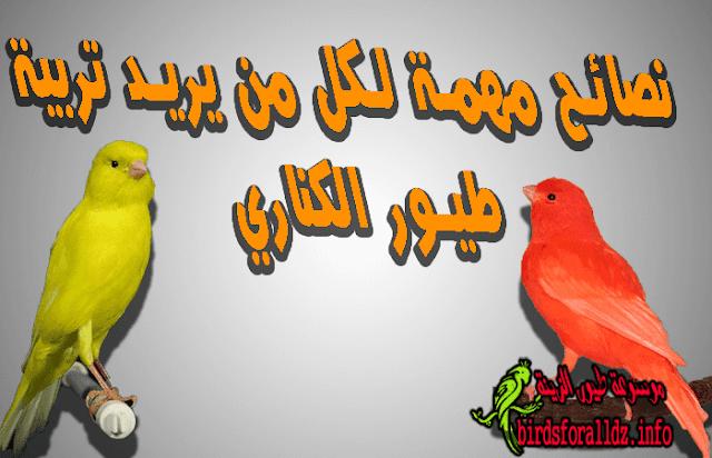 نصائح لمن يريد تربية طيور الكناري مهمة