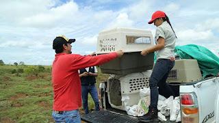 CORMACARENA: Masiva liberación de animales silvestres en Lomalinda Meta