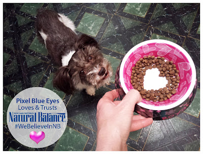 Pixel Blue Eyes loves and trusts Natural Balance. #We Believe In NB. Pixel is looking up at her dog bowl, held in her Mommy's hand, filled with food in the shape of a heart.