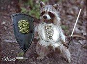 mapache con una armadura listo para luchar contra el encrespamiento capilar