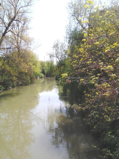 River Tundzha, Park Hotel Yambol, Yambol, Kingfisher, river, Town Park, bridge,