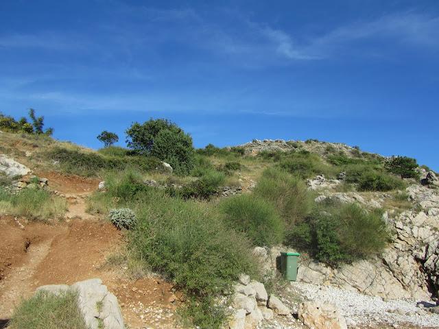 Vegetazione Macchia Mediterranea Krk