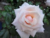 flor casamento significado