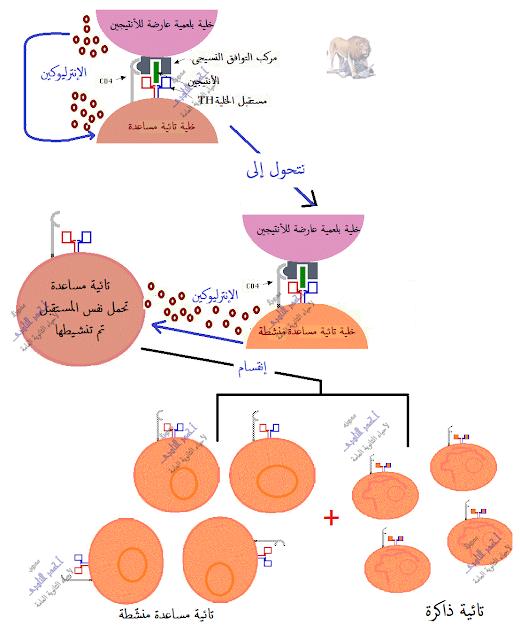 المناعة المكتسبة - المناعة الخلوية