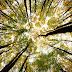 Pohon di Bagian Timur AS Bergeser ke Barat Saat Terjadi Perubahan Iklim