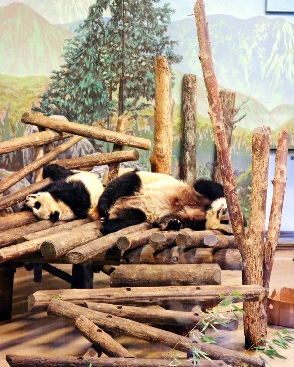 Tori's Pretty Life - The Pandas and the Toronto Zoo - Tori's Pretty Things Blog