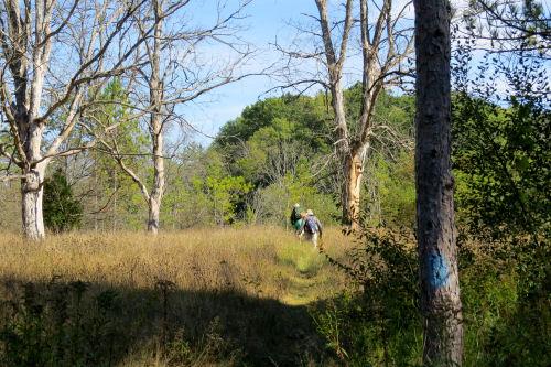 Leitch bayou