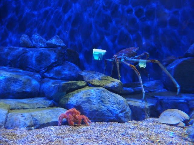 SEA Aquarium Singapore Giant Crab Exhibition